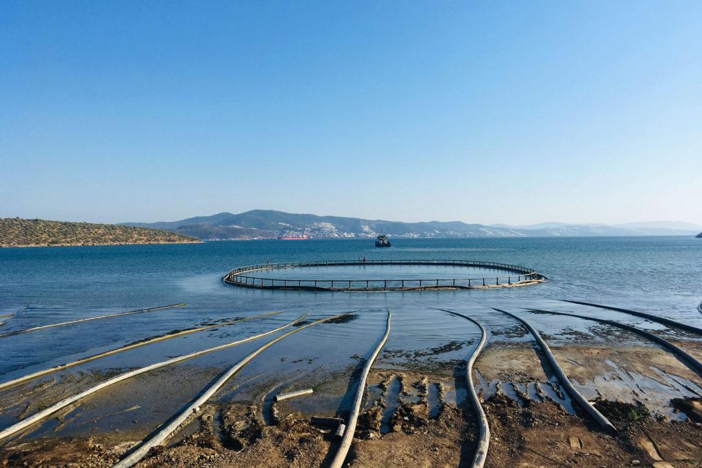 Gümüşdoğa's new facility in Güllük Bay will become the largest Bass and Bream farm in Turkey.