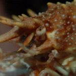 Crustaceans: more than what you find at the shellfish buffet